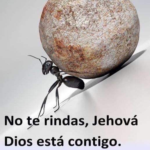 Para todas las cosas tengo la fuerza en virtud de aquel que me imparte poder. (Don't give up; Jehovah is with you.) SB