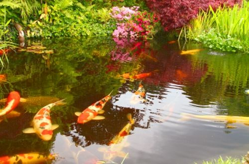 57 best fish ponds images on pinterest backyard ponds for Virtual koi fish pond