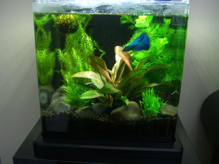 53 best betta aquariums images on pinterest fish tanks for Betta fish care water