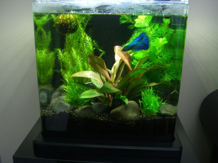 54 best images about betta aquariums on pinterest for Good fish for small tanks