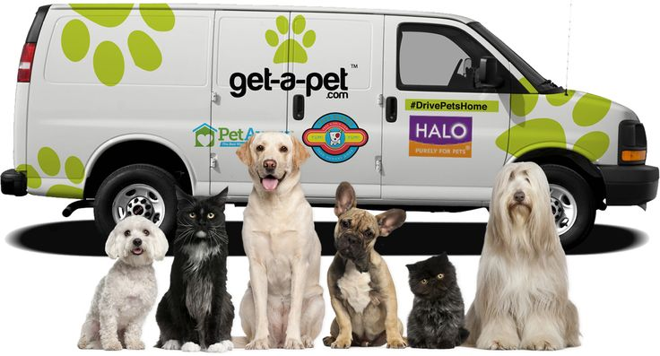 Get-A-Pet is also slated to hold a 'World's Largest Pet Adoption Fair' in January 2015, where we will be attempting to set a record in the Guinness Book of World Records for the most animals adopted in a single event.