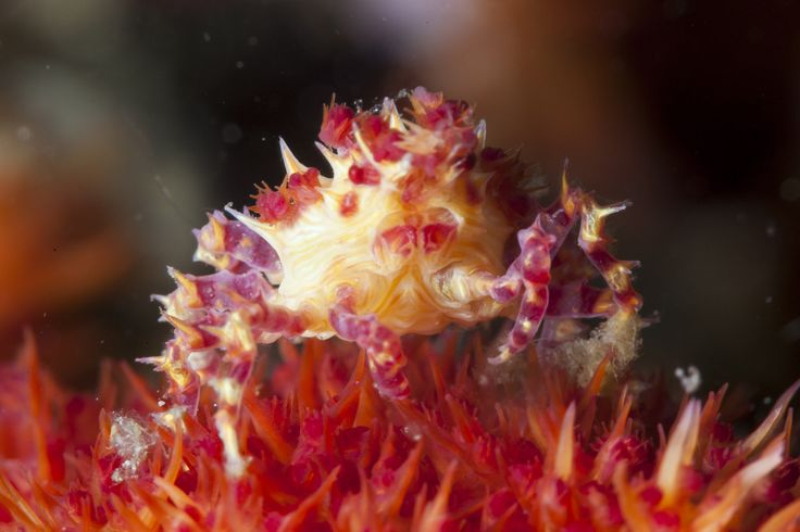 Crab | Flickr - Photo Sharing!