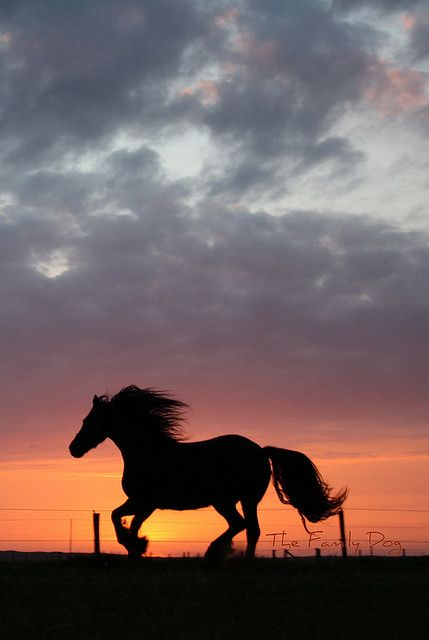 Sunset canter