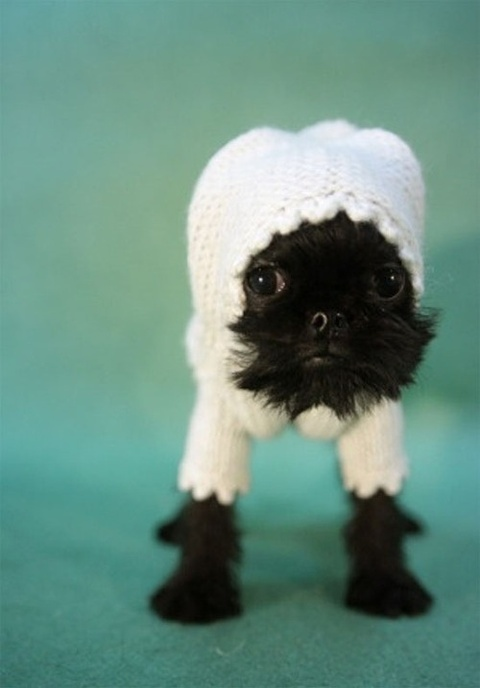I do not normally condone dressing animals up in stupid little outfits, but... d'AWWWWWWW!!!
