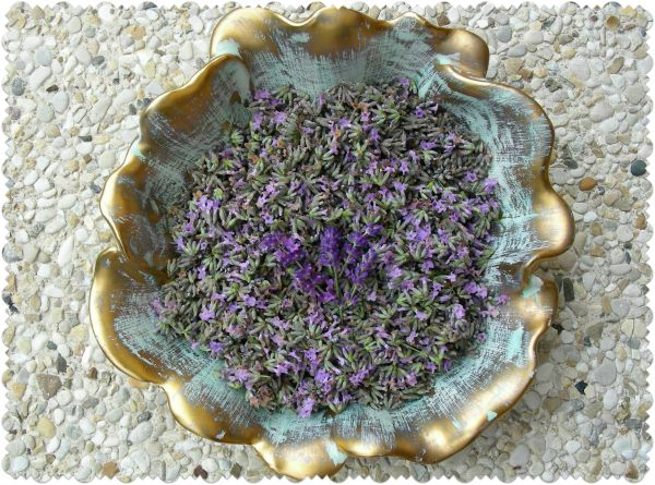 Lavender harvesting time has arrived in our garden.