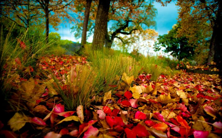 Leaves leave the trees - beautiful autumn carpet. Beautiful Nature Landscapes Desktop Wallpapers. Awsome Landscape Wallpapers. HD Wallpaper Download for iPad