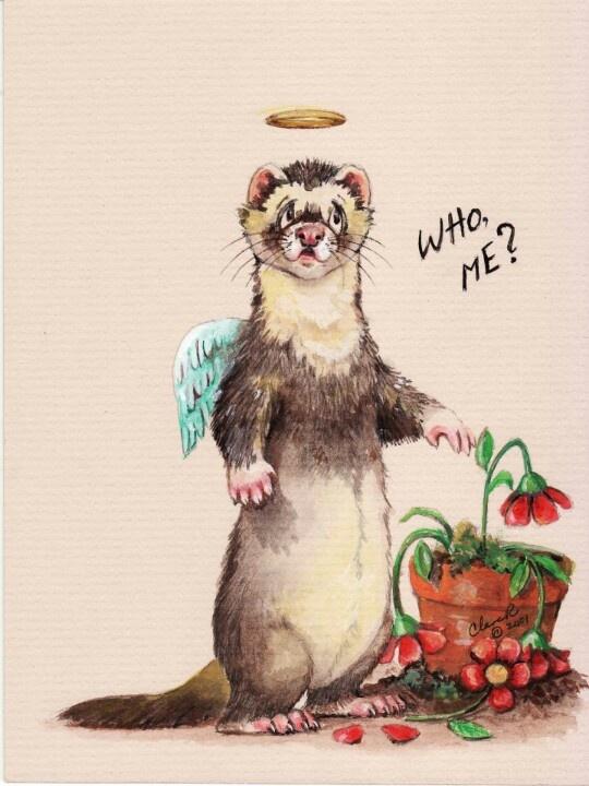 """Ferret """" Who Me, I didn't do it. Don't you see my halo, I'm a angel"""""""