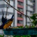 Fotografia Web | WildWeb@creative #PhotoArt #Web #Nature #Bird