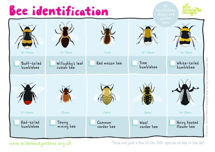 Bee identification - how many can you tell apart?