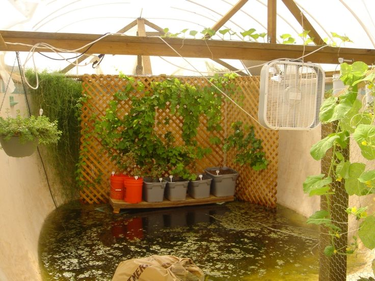 Garden Pool: The family gets about 8 fresh eggs a day, unlimited tilapia fish, organic fruit, veggies, and herbs 365 days a year. To our knowledge, the GP (short for Garden Pool) is a one of a kind creation.