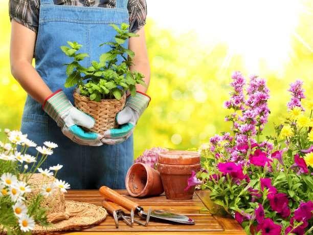 Ποια φυτά είναι κατάλληλα να φυτέψετε σε μπαλκόνια και κρεμαστά καλάθια