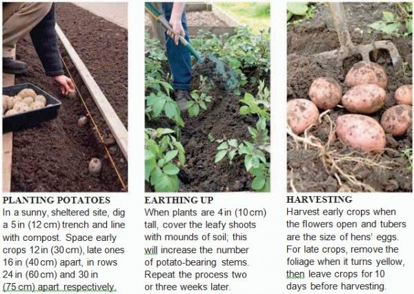 Growing Vegetables - Tips - Agriculture