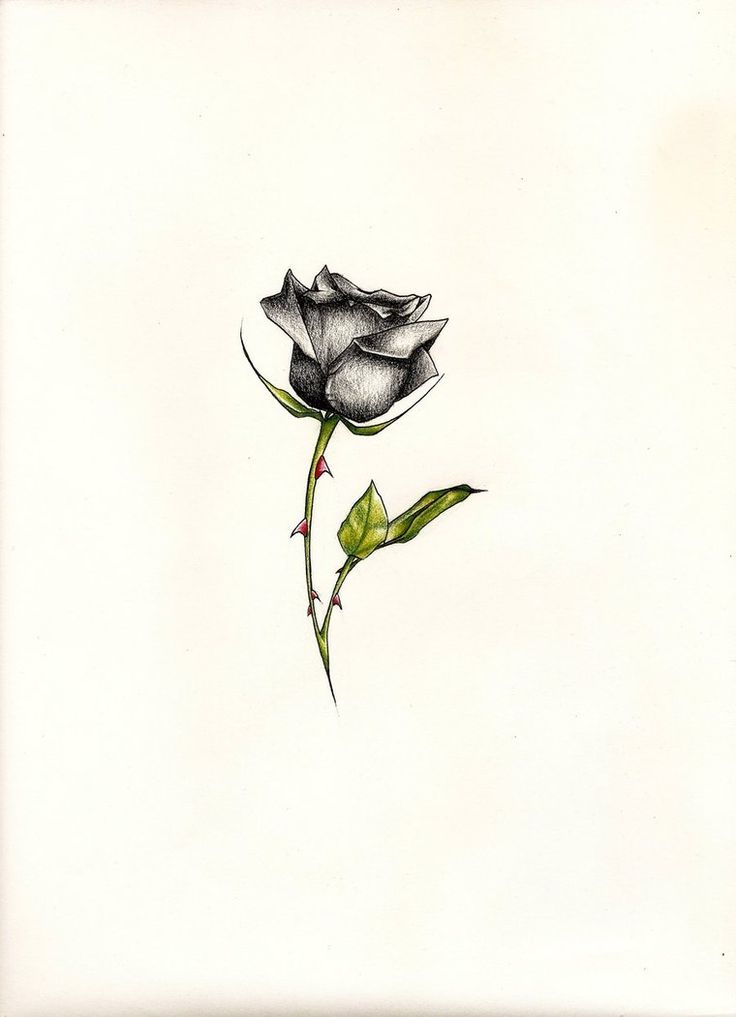 Black Rose Tattoo by *JohnVichlenski on deviantART
