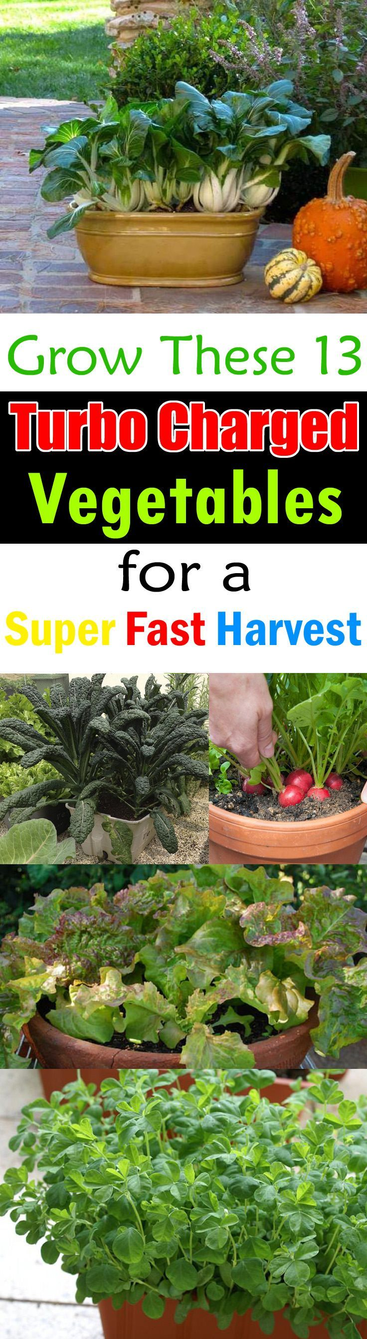 13 Fast Growing Vegetables For Containers. Veggie GardensVegetable ...