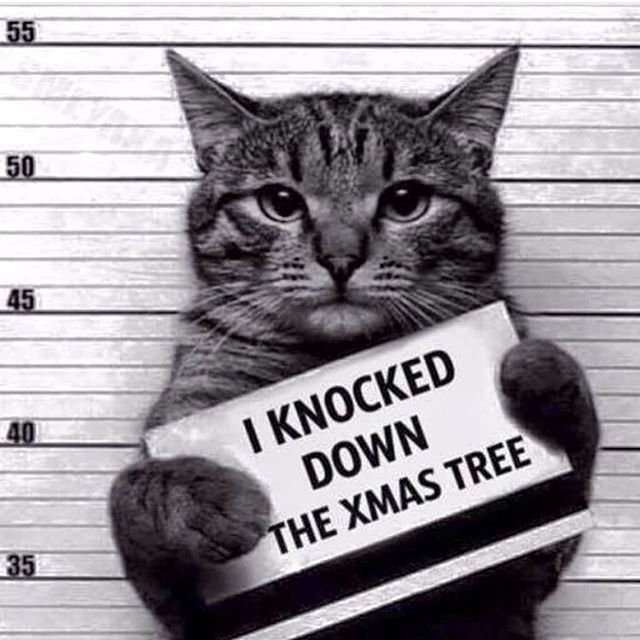 Best 25+ Cat christmas tree ideas on Pinterest | Painted ornaments ...