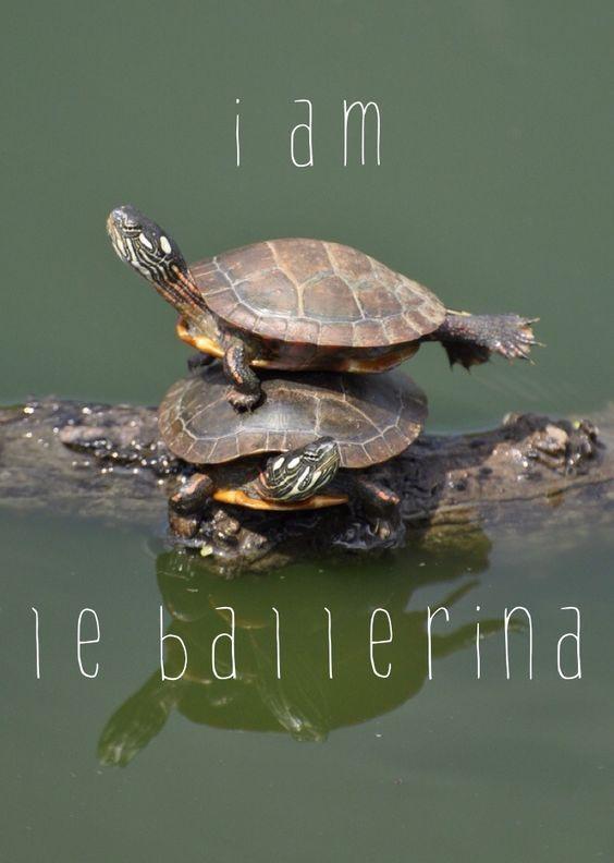 Cute ballerina #turtle #ballerina #animals