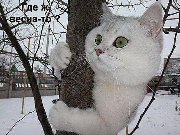 Моя страница вконтакте вход   ВКонтакте