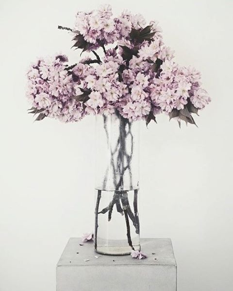 ____#flowersforever #february2017   / #nonnalietta