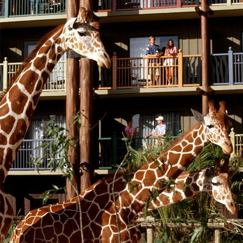 Disney's Animal Kingdom Villas - Kidani Village | Dream ...