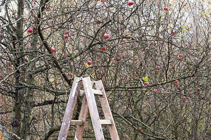 Ocet jabłkowy – dla zdrowia