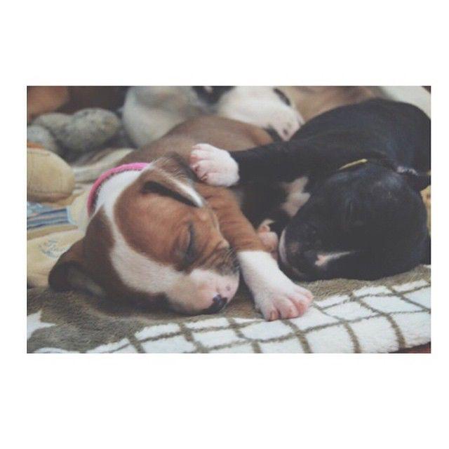 I går fikk vi igjen være sammen med vår 4uker gamle valp Bella  Hun er perfekt på alle måter, og vi gleder oss stort Hun blir nok en god grund til å leve ett sunt liv med fysisk aktivitet  Er det mange av dere her inne som@har Hund? #auroraweightloss #engelskstaff