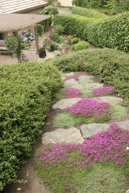 This gorgeous bed of creeping thyme may look delicate, but thyme is actually quite tough and can do just fine in low-traffic areas of the yard. Bonus: Thyme leaves are quite fragrant and smell beautiful when walked upon.