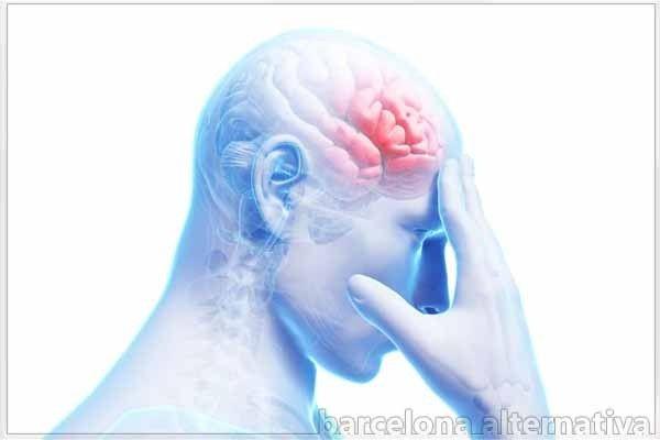 El lóbulo frontal es una de las partes del cerebro más estudiadas y más interesantes desde el punto de vista de la psicología, la neuropsicología y las neurociencias en general. No sólo por el hecho de ser el lóbulo más grande en el encéfalo humano, sino por las importantísimas funciones y capacidades cuya existencia debemos …