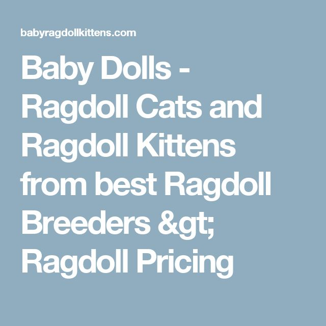 Baby Dolls - Ragdoll Cats and Ragdoll Kittens from best Ragdoll Breeders > Ragdoll Pricing