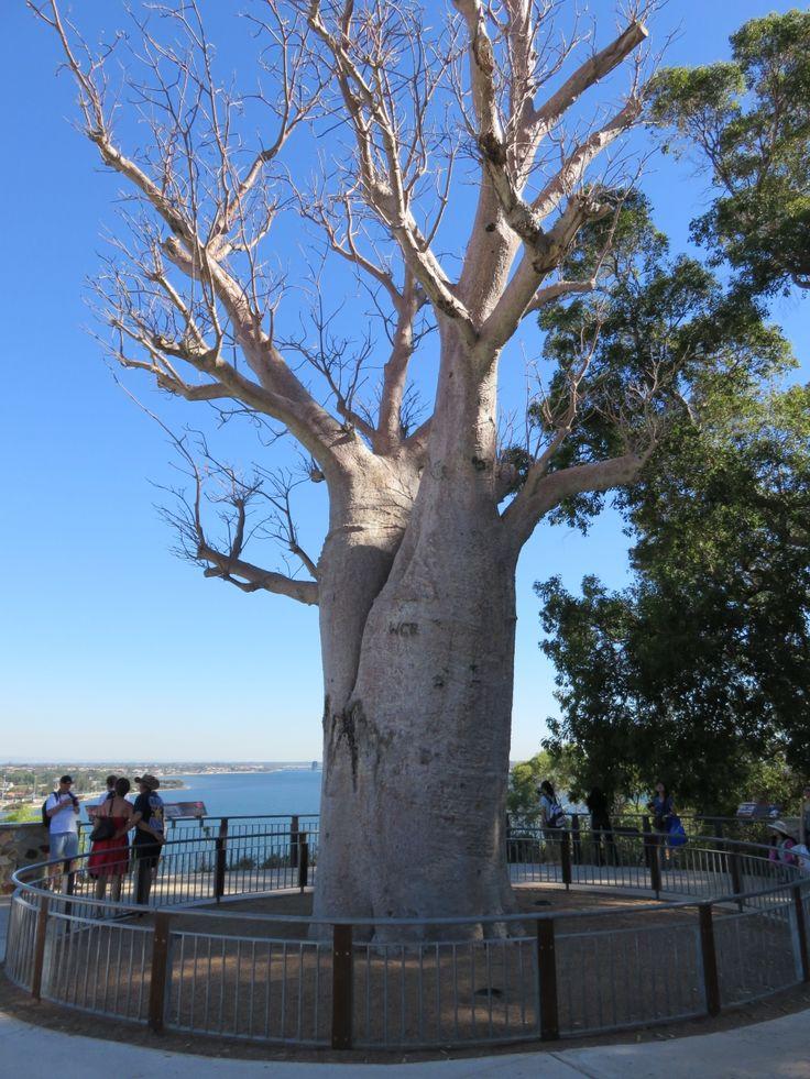 オーストラリア パース家族旅行 ①』 [パース]のブログ・旅行記 by ... 家族で三度目のオーストラリア旅行。<br />今回はパース。
