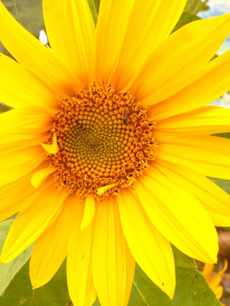 Amarillo radiante de esta maravillosa flor!!