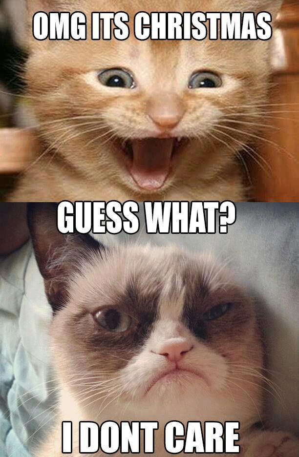 Ohhhh grumpy cat :)