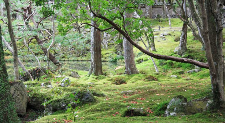 Koke-dera : le sublime temple des mousses