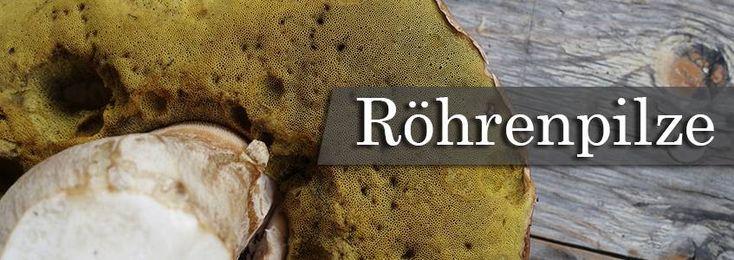 Hier kannst du alles über Röhrenpilze erfahren! https://www.denqbar.com/blog/Pilzarten-Teil-1-Die-R-ouml-hrenpilze/b-134/