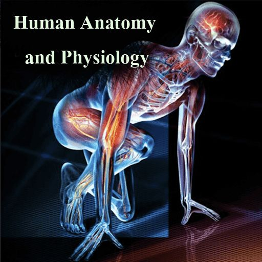 What is the best way to learn human anatomy and physiology?