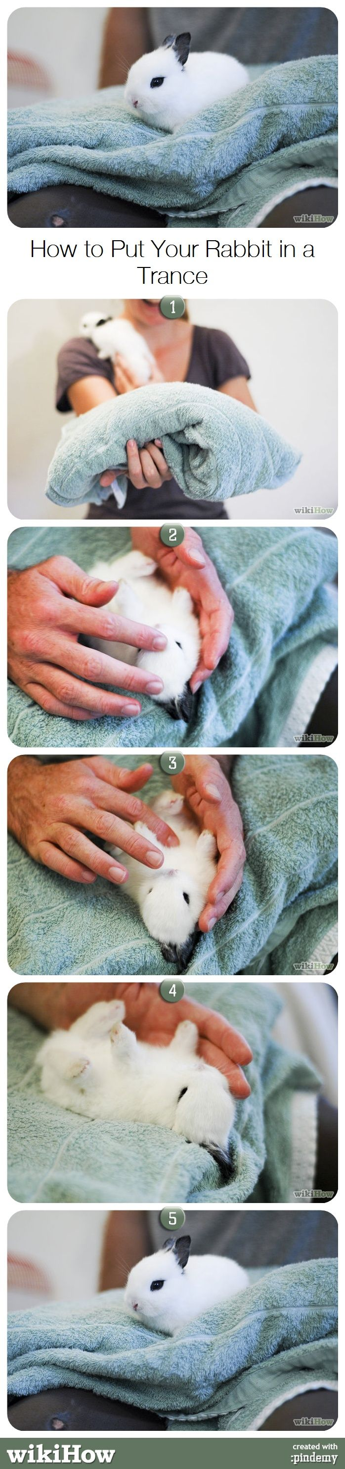 25+ Best Ideas About Bunny Care On Pinterest  Pet Bunny Rabbits, Caring  For Rabbits And Pet Rabbit