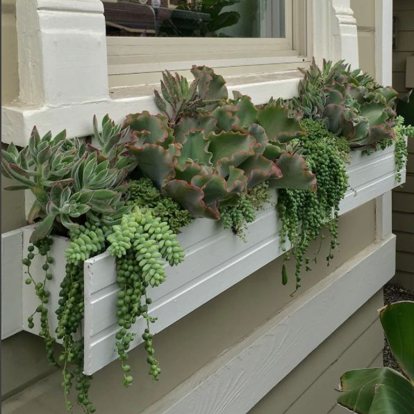 Succulent window box in front of shop