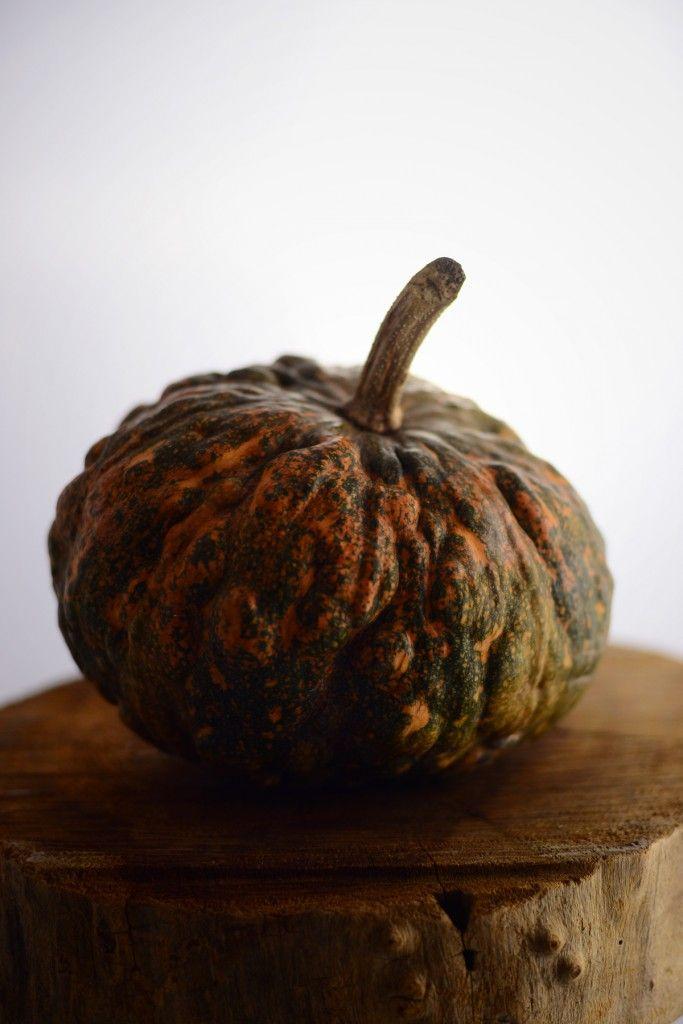 zucca power. pumpkin.