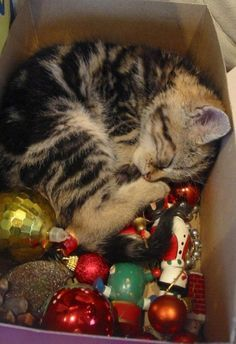 Looks like our tree topper is catching a little cat nap!!