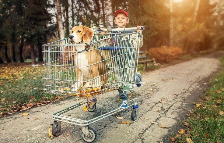 Creative Photo Team » Beagle- Бигль