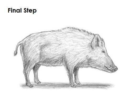 Boar Drawing Final | Drawing in 2019 | Drawings, Animal