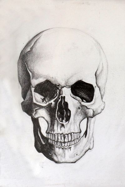 Skull sketch...nice for a clean tarroo