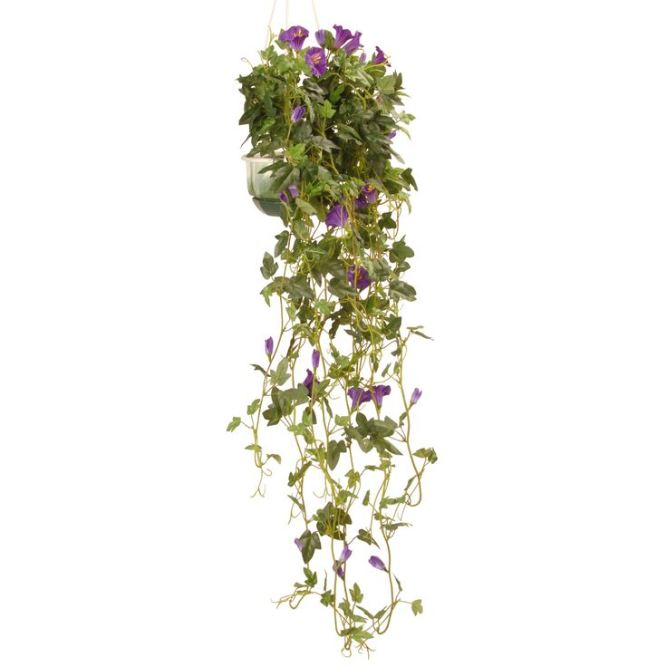 Hanging Petunia Plant in Pot