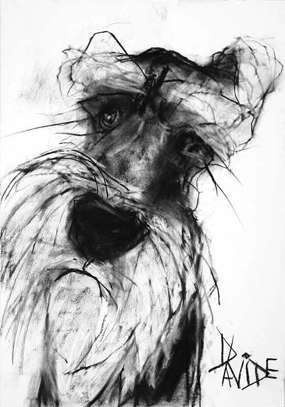 Lovely portraits of all manner of doggies sold by an art gallery devon called Davidson Fine Art, price on application.
