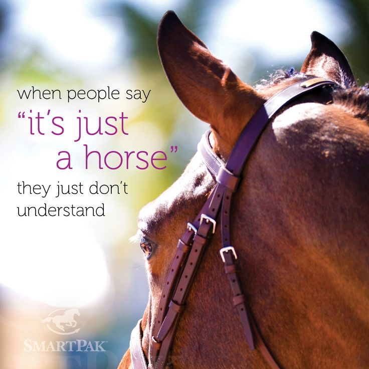 All riders know horses are more than just a horse. They are a friend, always there for you through the roughest moments