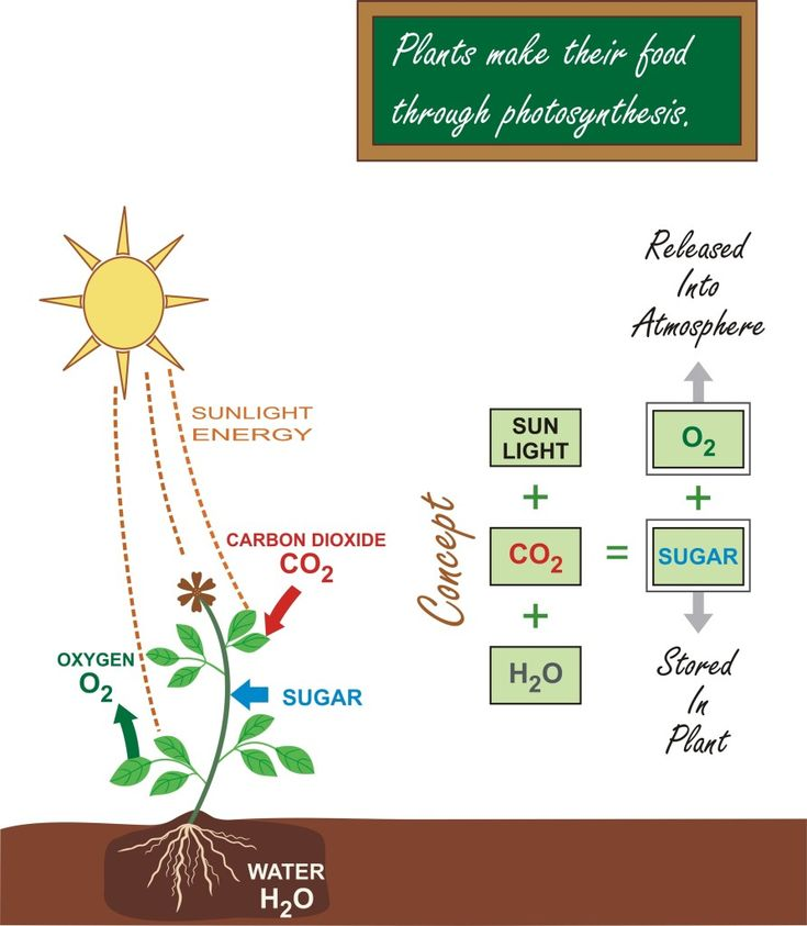 photsynthesis articles Photosynthesis news find breaking news, commentary, and archival information about photosynthesis from the latimes.