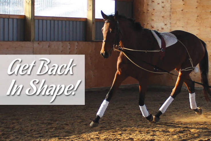 Greenhawk Harness & Equestrian Supplies | Greenhawk