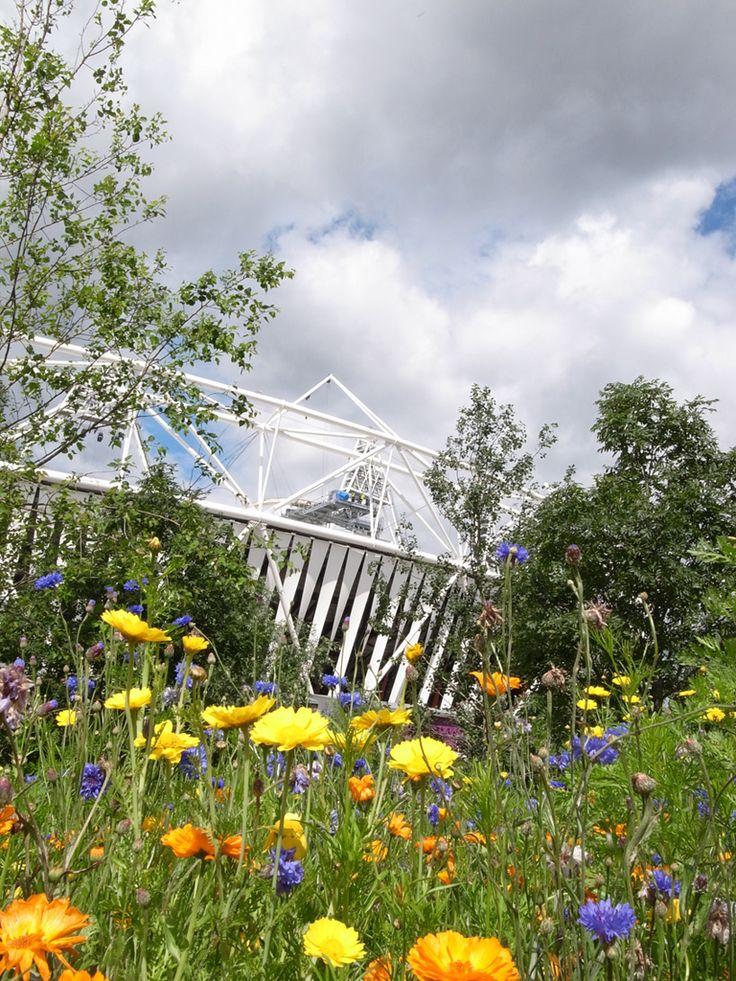 London Olympic stadium and planting