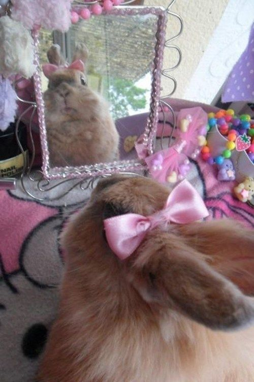 Mirror, mirror on the wall, who's the prettiest bunny of them all? I feel pretty... oh so pretty!