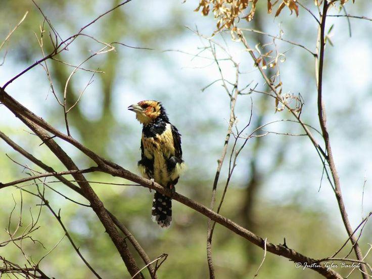 Photographed by: Ranger Justin Tyler Barlow on the Amakhala Game Reserve. #birdlife #amakhala