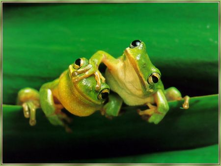 yes, sometimes even frogs are cute. I like tiny ones.